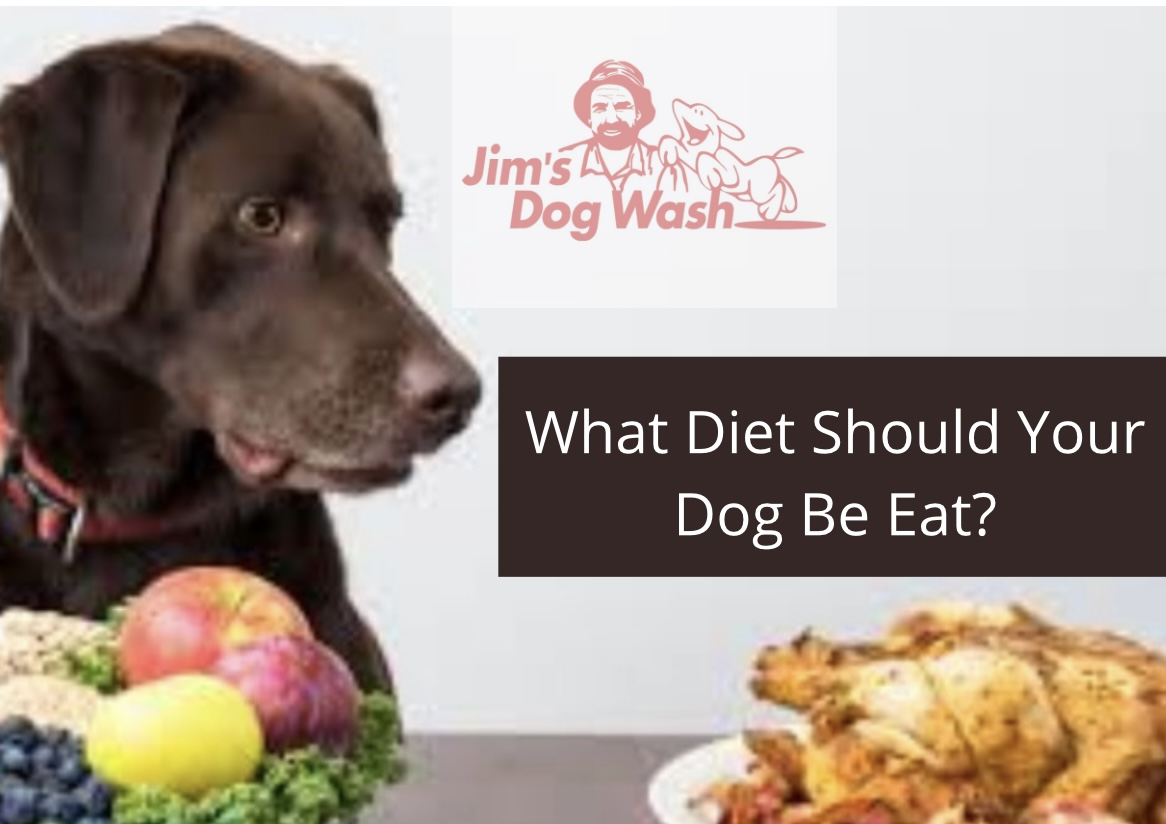 Healthy Diet For Your Pooch