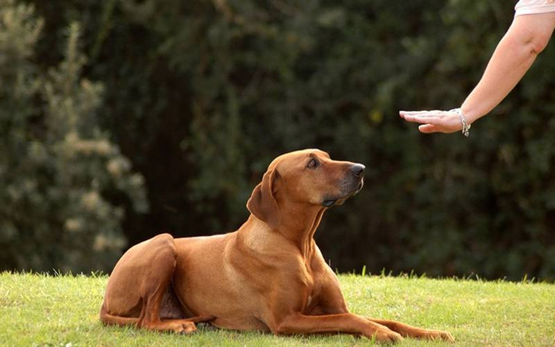 Top Tips To Change Your Dog's Behaviour