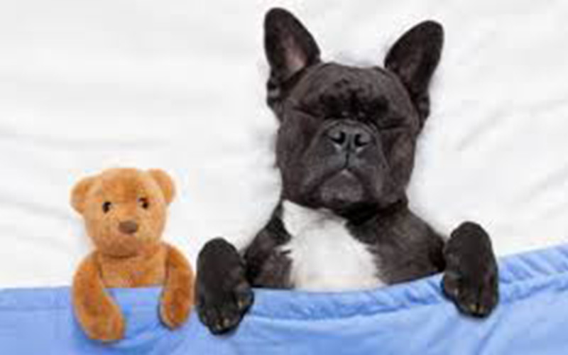 What Does Your Dog Dream About?