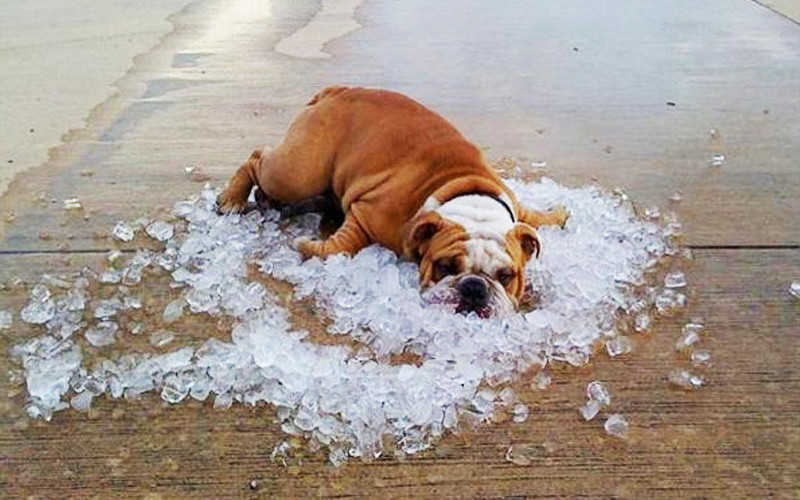 Hot Weather Dogs: Tips For Keeping Your Best Friend Cool In Summer