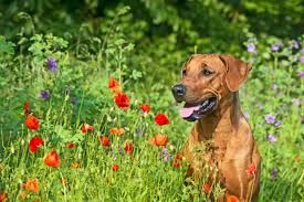 Does Your Dog Eat Grass – Should You Be Concerned?
