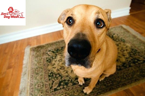 Is Your Dog Peeing In The House?