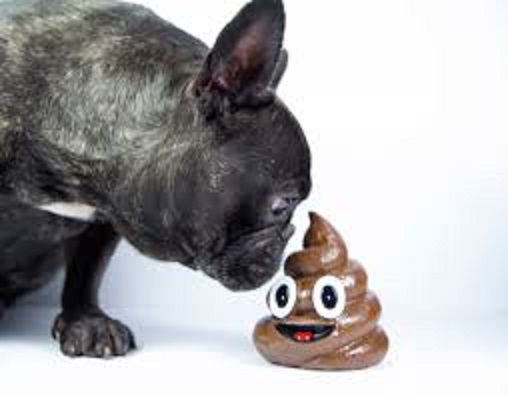 Help! My Dog Is Eating Poop!